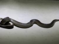 Гигантских морских змеев выбросило землетрясением на Филиппинах